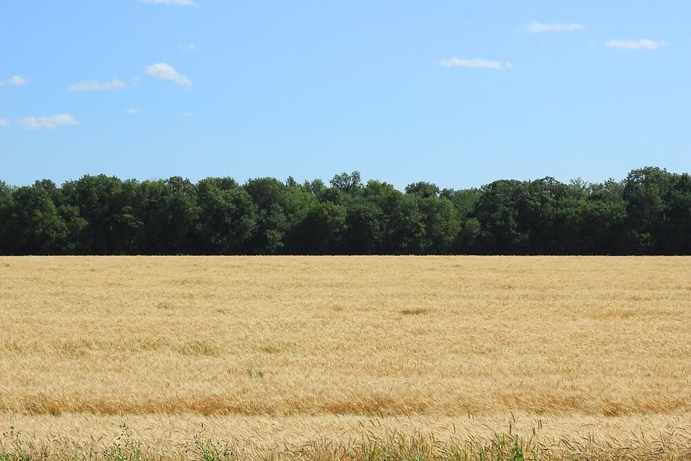 Grain Field on the Prairies by rhamm