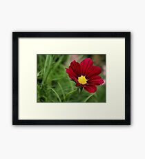 Cosmo Glory Featured Photo! Framed Print