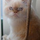 cat nip anyone? by katpartridge
