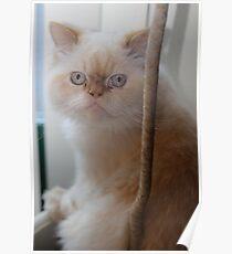 cat nip anyone? Poster