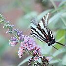 flutter by by katpartridge