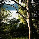 Tree Ghost by Jeanne Sheridan