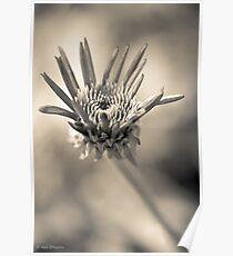 Garden variety monochrome Poster