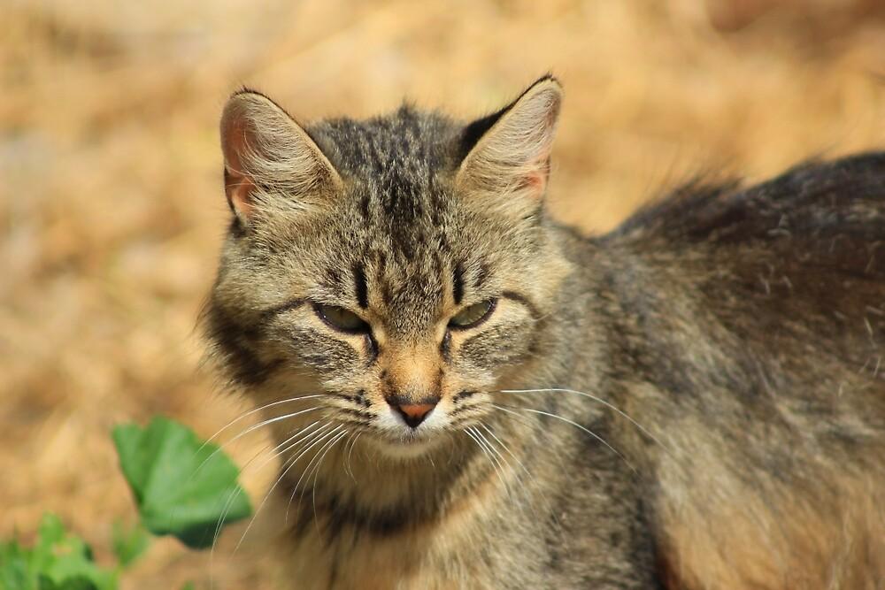 Cat in a Yard by rhamm