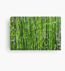 Green plants Canvas Print