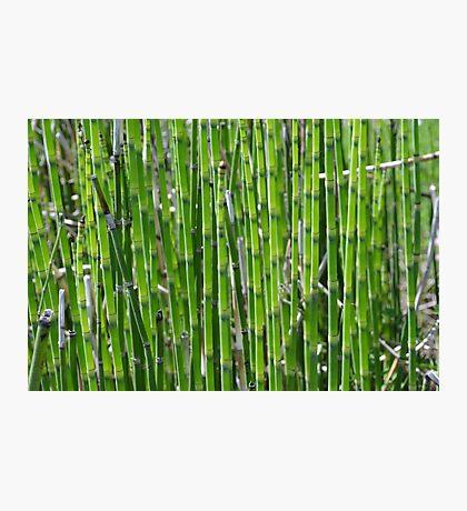 Green plants Photographic Print