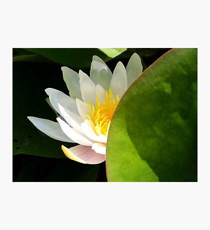 water blossom  Photographic Print