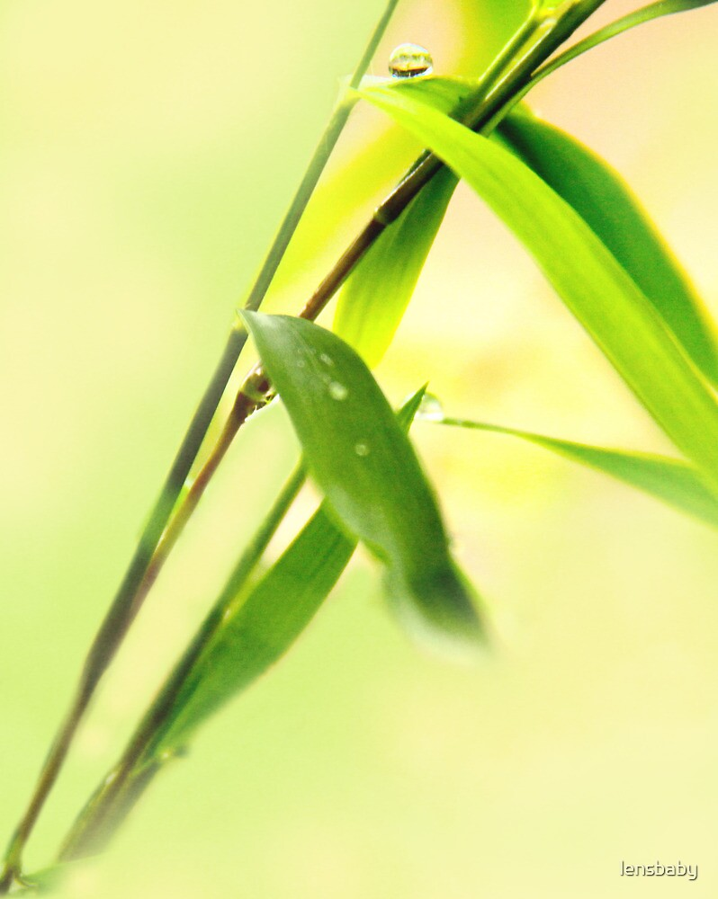 green green grass and raindrops by lensbaby