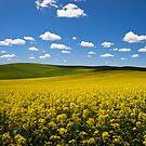 Wind blown flowers by Steve Biederman