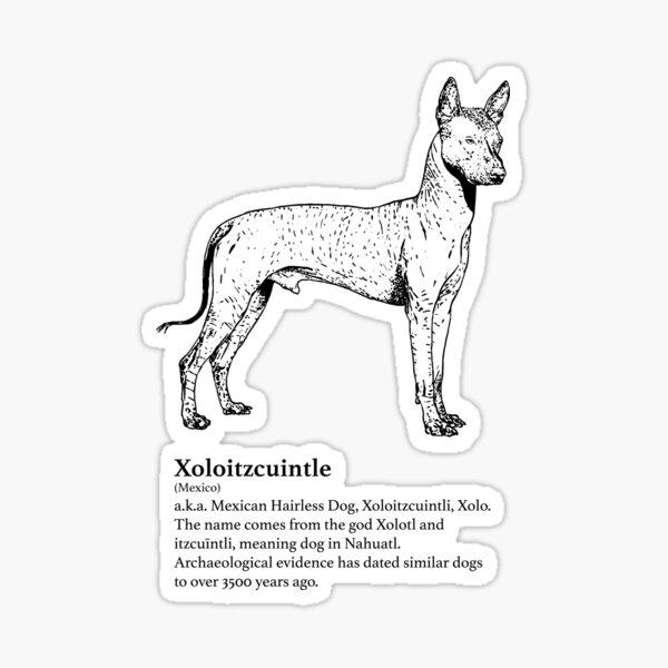 Xoloitzcuintle Sticker
