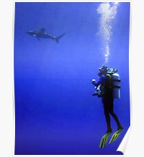 Watching the Oceanic Whitetip Poster