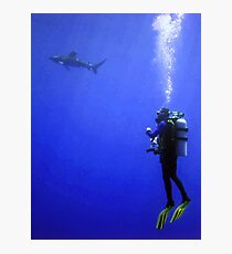Watching the Oceanic Whitetip Photographic Print