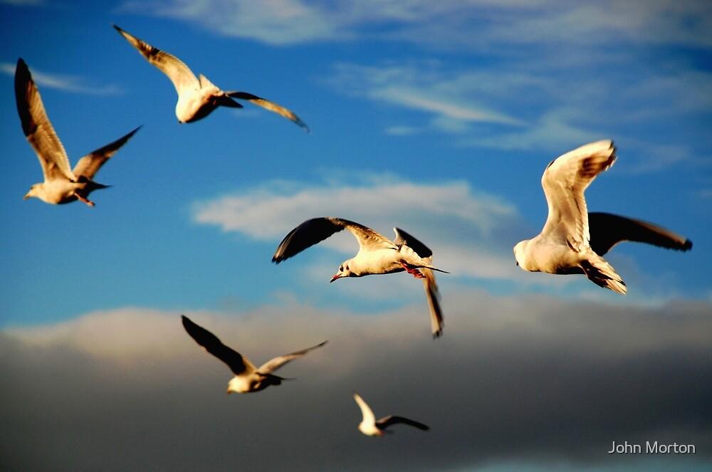 Flight by John Morton