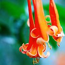flaming trumpet by lensbaby