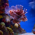 Scorpionfish by redscorpion