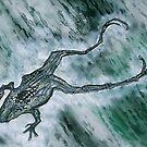 metamorphosis . . . . . . .? by evon ski
