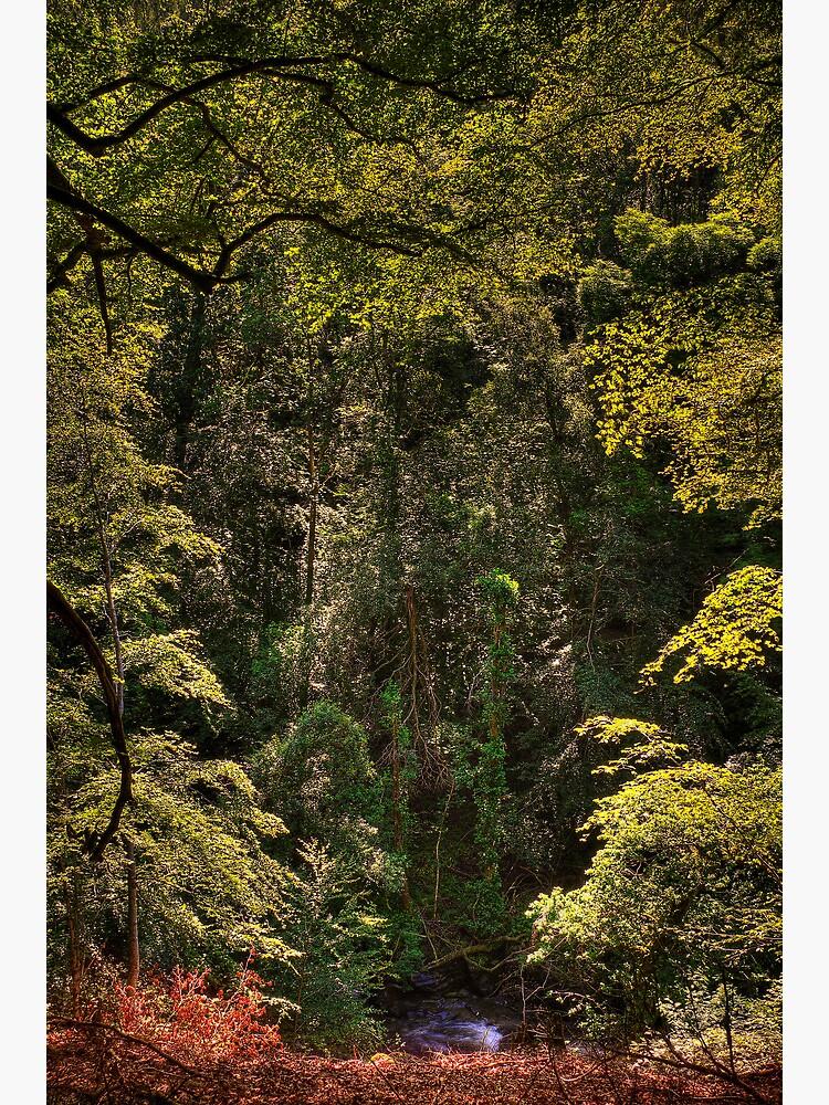 Birks of Aberfeldy (1) by Shuggie