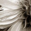 Sunflower 1 by Joanne Mariol