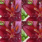 garden observations flowers by H J Field