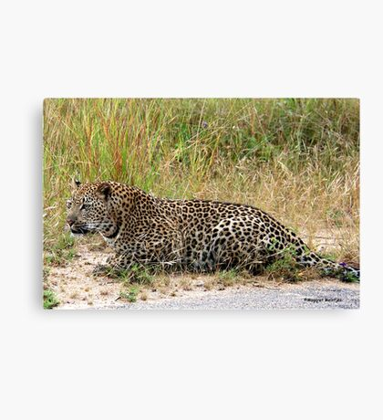 AMAZING BLENDING - THE LEOPARD - Panthera pardus Canvas Print