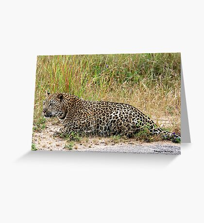 AMAZING BLENDING - THE LEOPARD - Panthera pardus Greeting Card