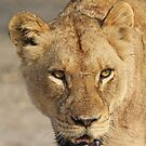 A battle tested lioness! by Anthony Goldman