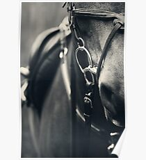 Bridle Poster