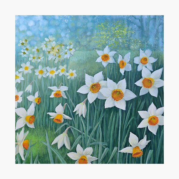 Host of Daffodils Photographic Print