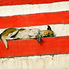 Sleeping dog by Mark Smart