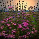 Field Mint - Wildflowers by Charles & Patricia   Harkins ~ Picture Oregon