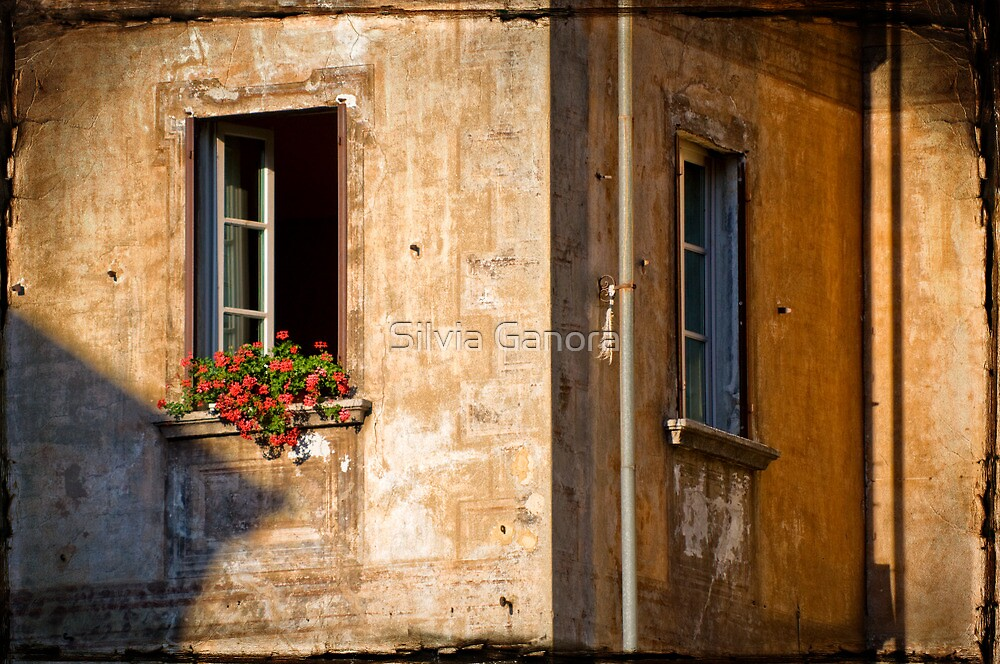 Window with geraniums by Silvia Ganora