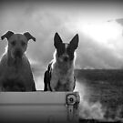 The Farm Dogs by Paula McManus