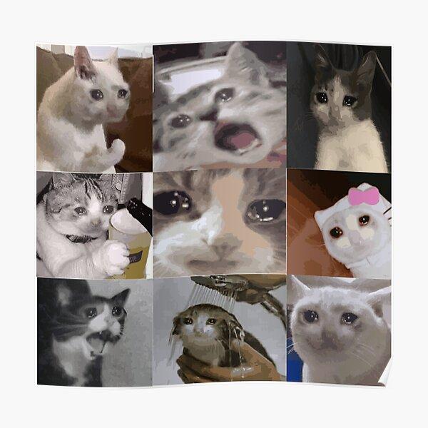 Weinende Katze