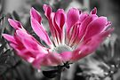 In the pink... by Astrid Ewing Photography