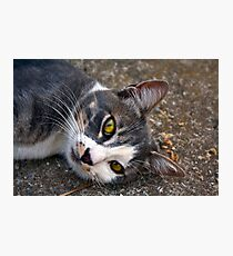 CAT PORTRAIT CLOSE UP Photographic Print