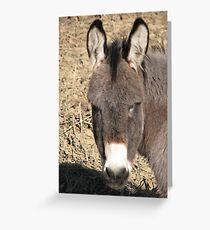 Donkey II Greeting Card