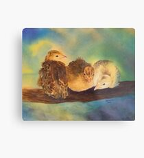 """Turkey Toddler Trio"" - Baby Turkeys on the Roost Metal Print"