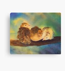 """Turkey Toddler Trio"" - Baby Turkeys on the Roost Canvas Print"