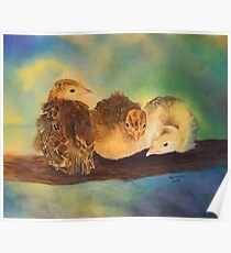 """""""Turkey Toddler Trio"""" - Baby Turkeys on the Roost Poster"""