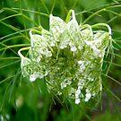 Strange flower by Shulie1