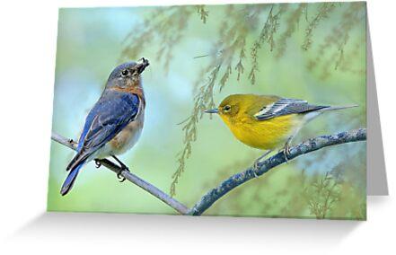 Bluebird meets Warbler by Bonnie T.  Barry