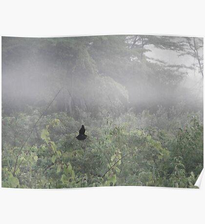 Blackbird in Fog Poster