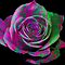 Multi-colored Roses [created], Special Effects Roses, or unusual Artifical Roses