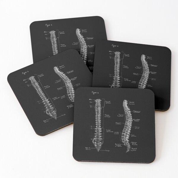 Spine anatomy on chalkboard black and white Coasters (Set of 4)