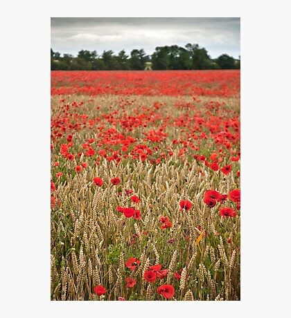 Lincolnshire Poppy Field Photographic Print