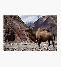 Camel on the Karakoram Highway Photographic Print
