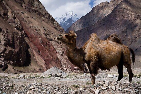 Camel on the Karakoram Highway by Gillian Anderson LAPS, AFIAP
