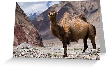 Gateway to the Karakoram Highway by Gillian Anderson LAPS, AFIAP