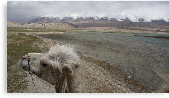 Camel at Lake Kara Kul by Gillian Anderson LAPS, AFIAP