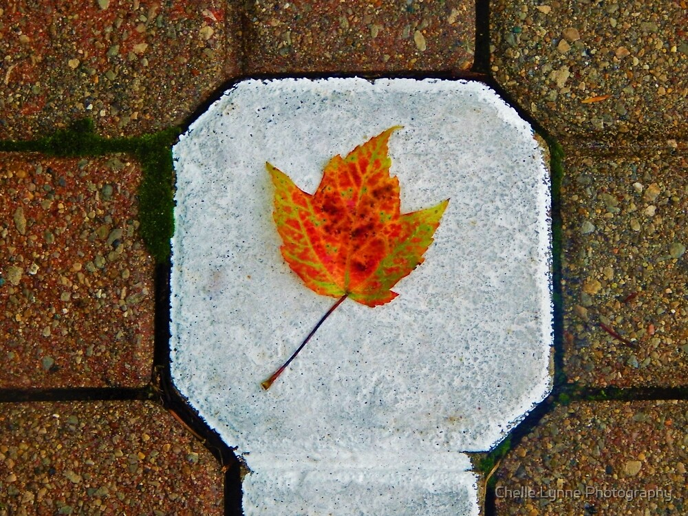 Concrete Leaf by Chelle Lynne Photography